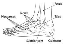 The Ashi Point For Heel Pain